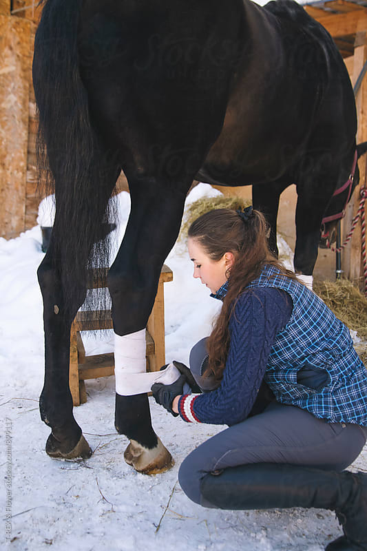 Young woman bandaging horse's leg by T-REX & Flower for Stocksy United