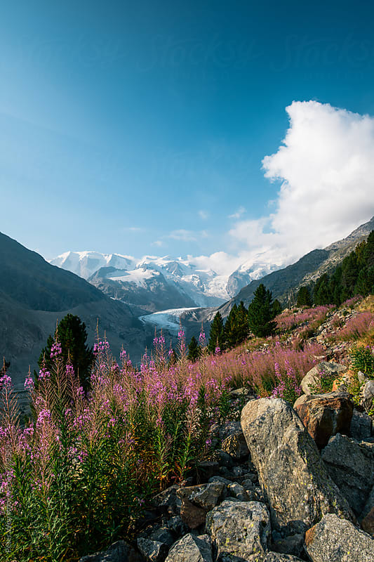 Morteratsch valley by Peter Wey for Stocksy United