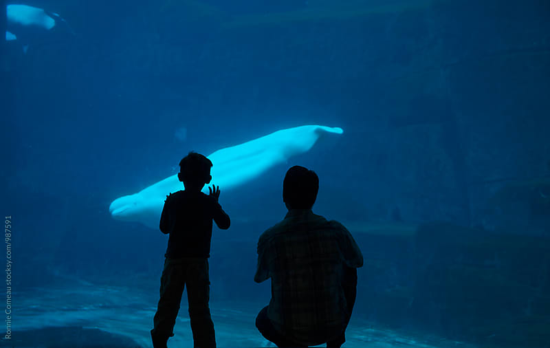 Father And Son At Aquarium by Ronnie Comeau for Stocksy United