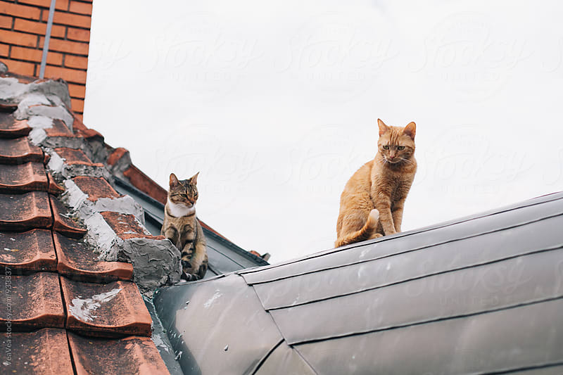 Cats sitting on a roof by Marija Mandic for Stocksy United