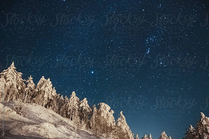 Starry sky over the snowy forest by Boris Jovanovic for Stocksy United