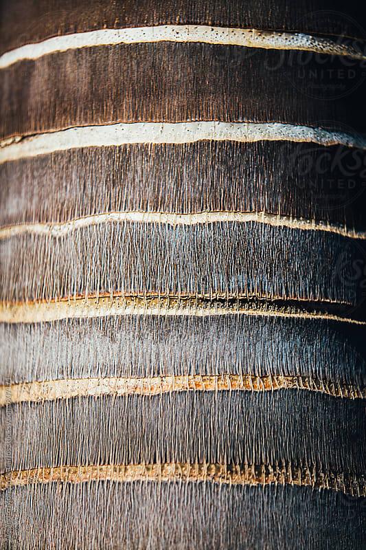 Trunk of a palm tree closeup  by Alejandro Moreno de Carlos for Stocksy United