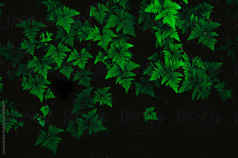 Abstract green plants background by Cosma Andrei for Stocksy United