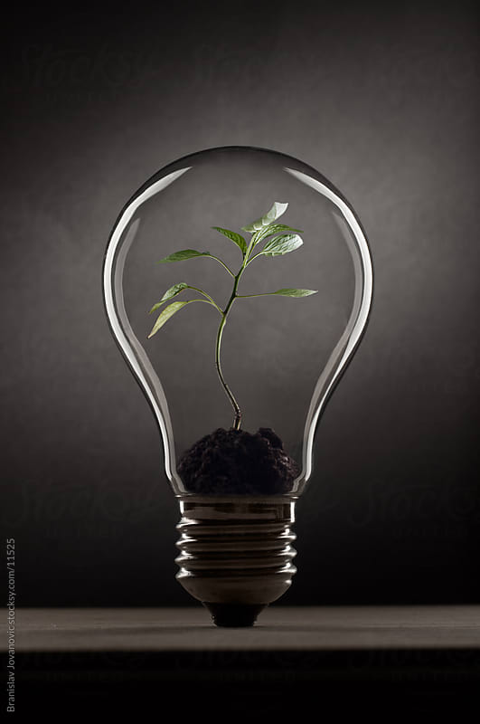 Plant inside the bulb by Branislav Jovanović for Stocksy United