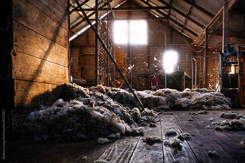 Shearing shed of an Australian wool grower by Robert Lang for Stocksy United