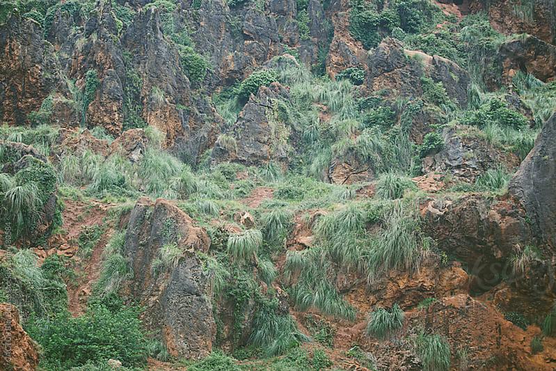 Rocks and vegetation  by Blai Baules for Stocksy United
