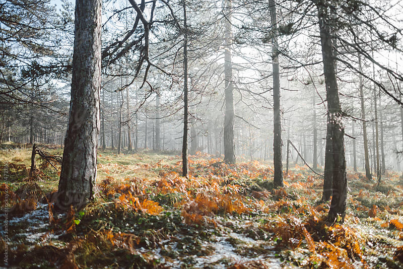 Early winter landscape by Aleksandra Jankovic for Stocksy United