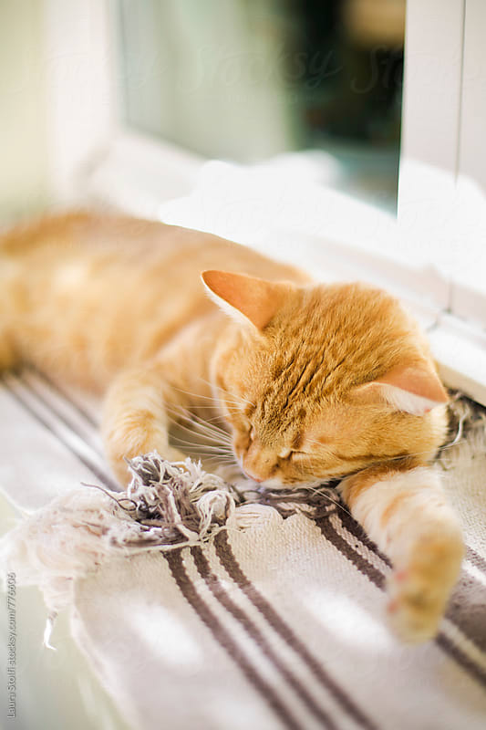 Close up of cat sleeping in garden on windowsill by Laura Stolfi for Stocksy United