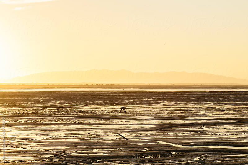 Silhouette Shellfish Picking by Agencia for Stocksy United