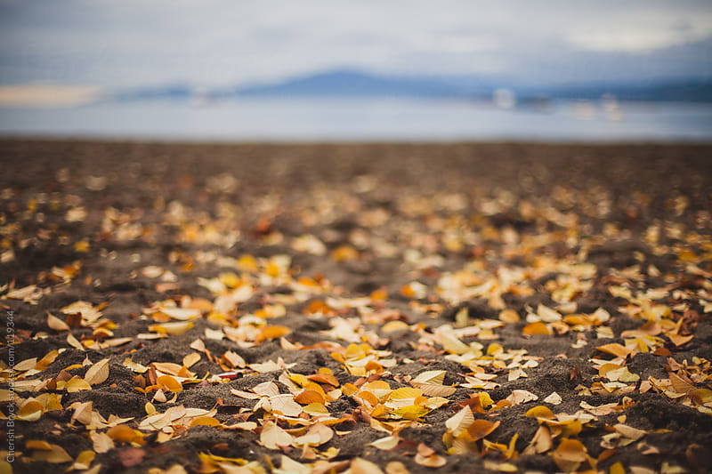 A wash of golden leaves have fallen on the sand at the beach. by Cherish Bryck for Stocksy United