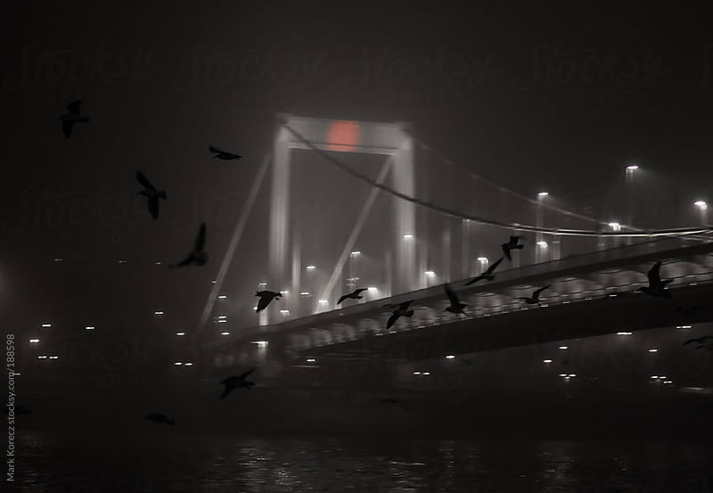 Gulls in front of a bridge by Mark Korecz for Stocksy United