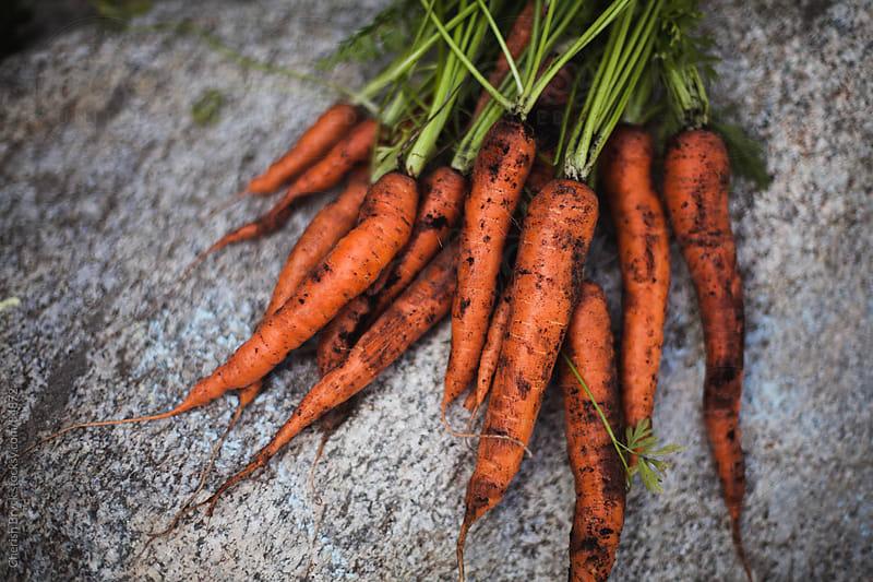 Carrot Harvest by Cherish Bryck for Stocksy United