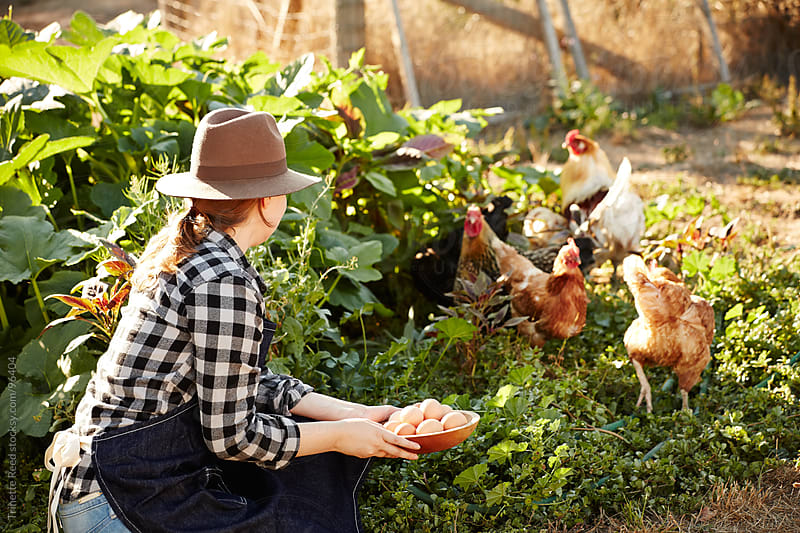 Woman farmer with fresh picked organic eggs and chickens on farm by Trinette Reed for Stocksy United