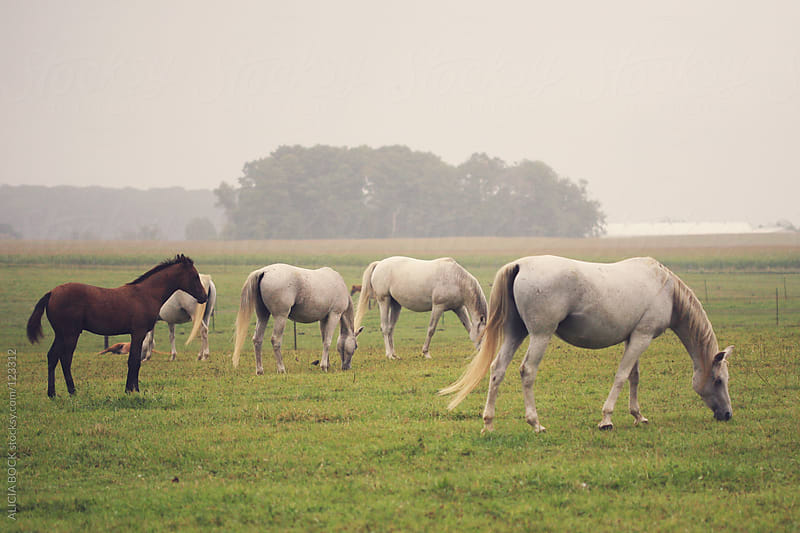 Grazing Horses #4 by ALICIA BOCK for Stocksy United