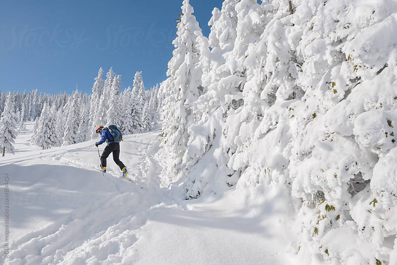 Ski touring in deep snow through forest by RG&B Images for Stocksy United