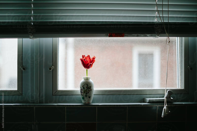 A single red tulip in a vase on a windowsill by Kelli Seeger Kim for Stocksy United