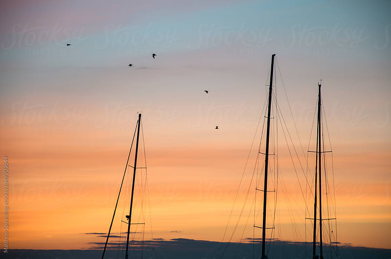 Sailboat masts in harbor at sunset by Matthew Spaulding for Stocksy United