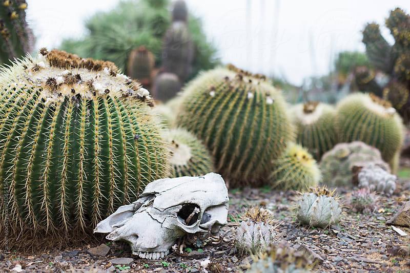 Skull Garden by Gary Parker for Stocksy United
