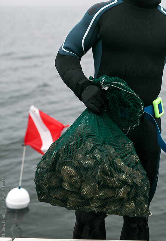Person holding fresh oysters in bag caught while diving by Matthew Spaulding for Stocksy United