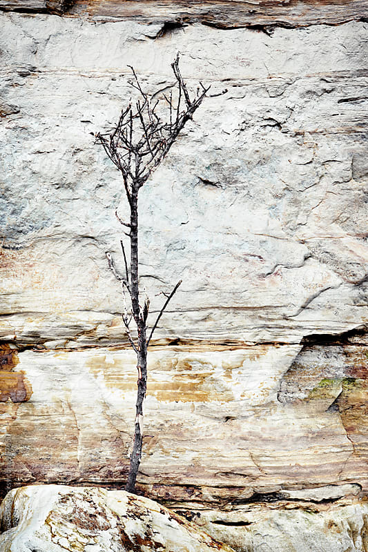 A tree by a rock face by James Ross for Stocksy United