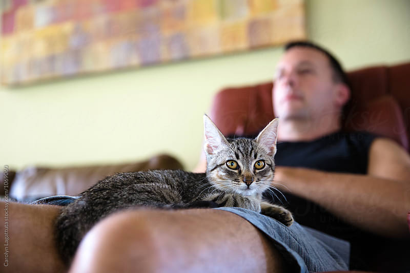 Tabby kitten on her male owner's lap by Carolyn Lagattuta for Stocksy United