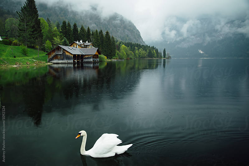 White swan floating on lake in mountains by Andrey Pavlov for Stocksy United