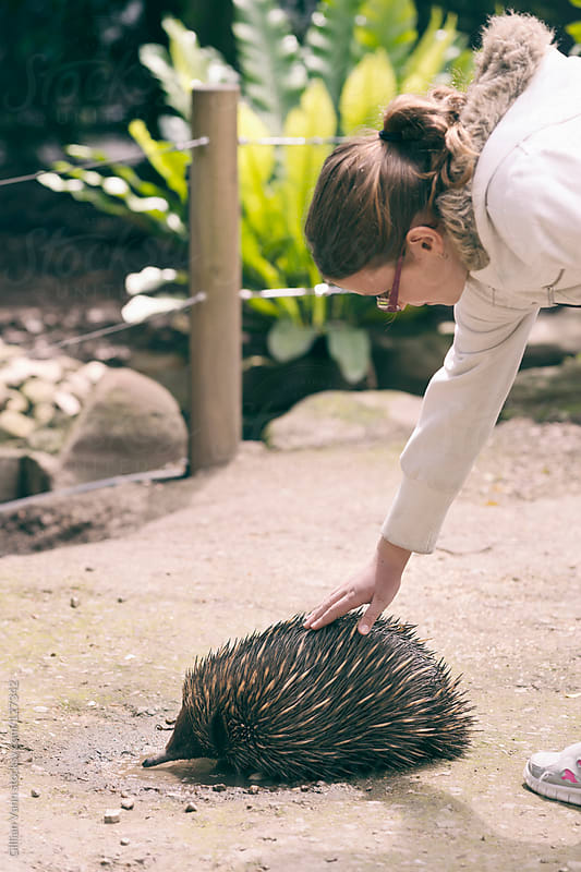 close encounter with an echidna by Gillian Vann for Stocksy United