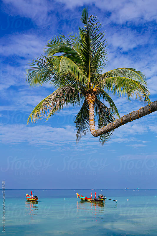 Palm tree over a blue sea with small boats and far horizon by Soren Egeberg for Stocksy United