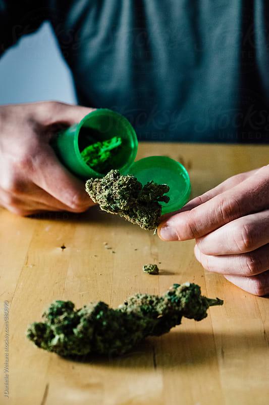 Caucasian hands holding medical marijuana buds by J Danielle Wehunt for Stocksy United