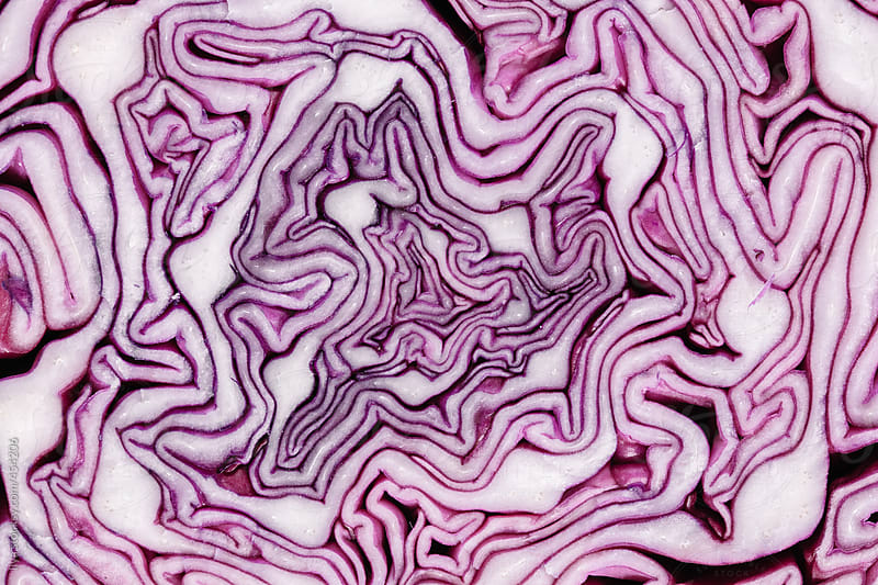 Red (purple) cabbage slice macro creating abstract pattern by Ilya for Stocksy United