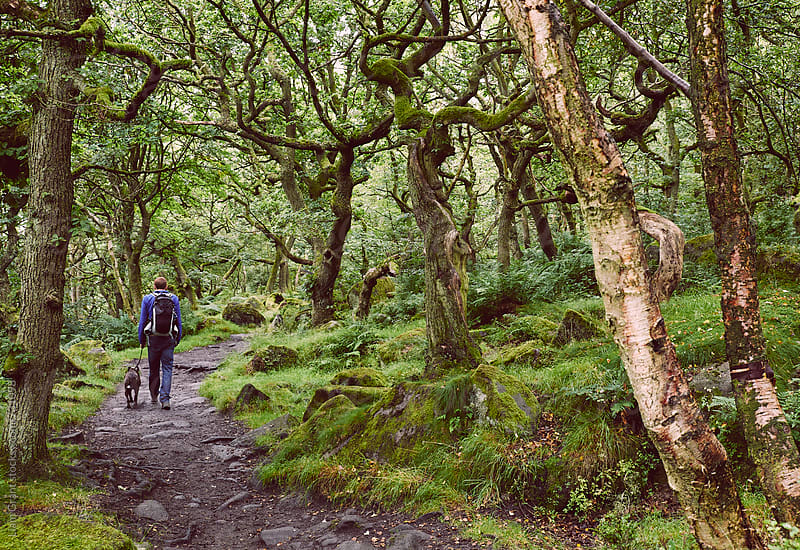 Male walking with his dog through ancient Oak woodland. Padley Gorge, Derbyshire, UK. by Liam Grant for Stocksy United