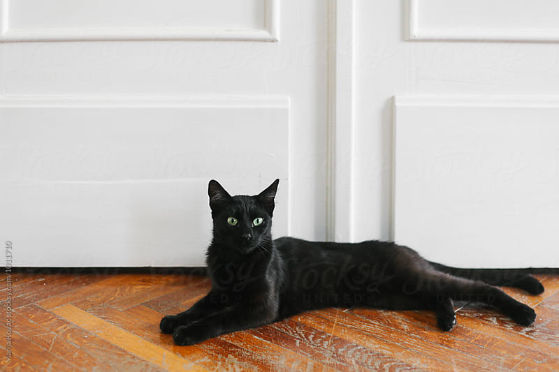 Beautiful black cat laying on the floor  by Marija Kovac for Stocksy United