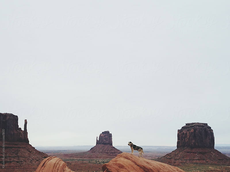 Monument Valley Rock Dog by Kevin Russ for Stocksy United