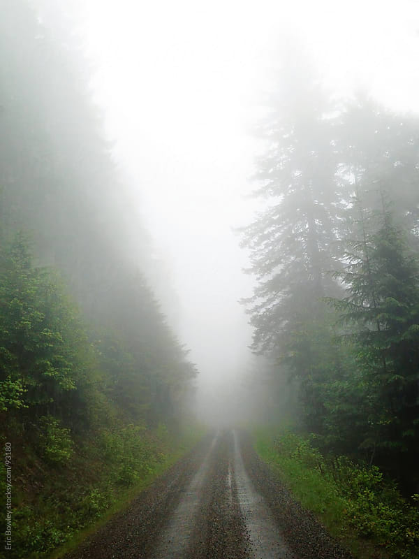 Foggy Morning Forest Service Road by Eric Bowley for Stocksy United