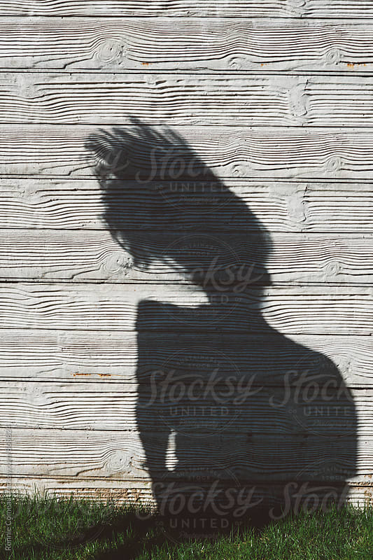 Shadow On Wall Of Girl Shaking Long Hair by Ronnie Comeau for Stocksy United