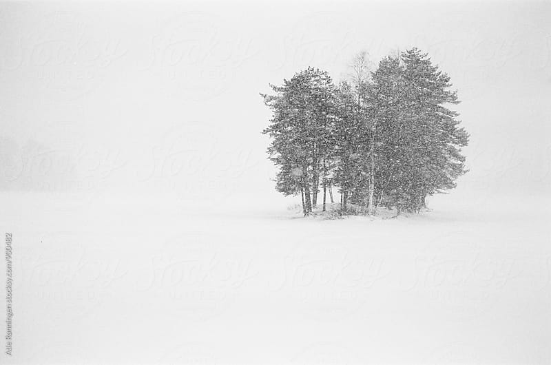 A group of trees a foggy and snowy day at the lake by Atle Rønningen for Stocksy United