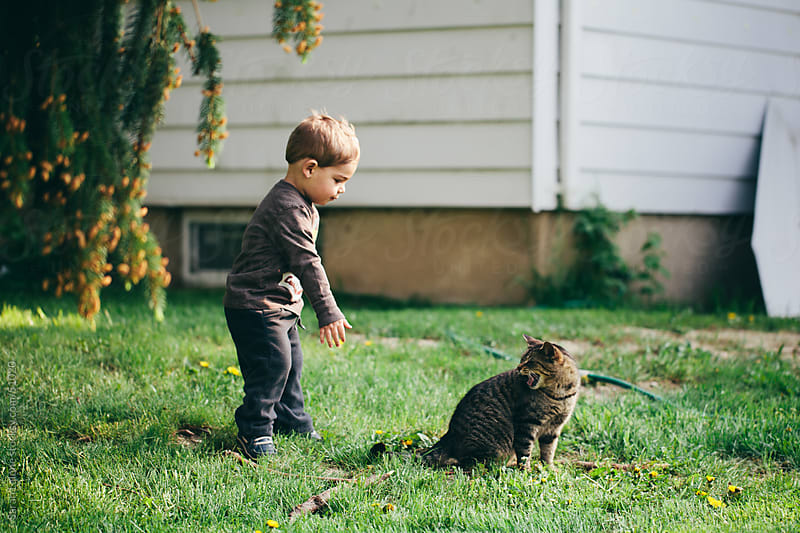 A toddler trying to grab a cat's tail and getting hissed at. by Sarah Lalone for Stocksy United