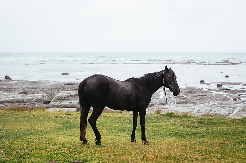 One black horses on coastline by Martí Sans for Stocksy United