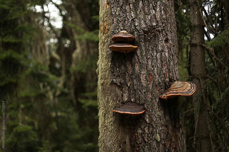Mushroom on trunk by Milles Studio for Stocksy United