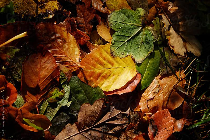 Carpet of leaves by Jon Attaway for Stocksy United