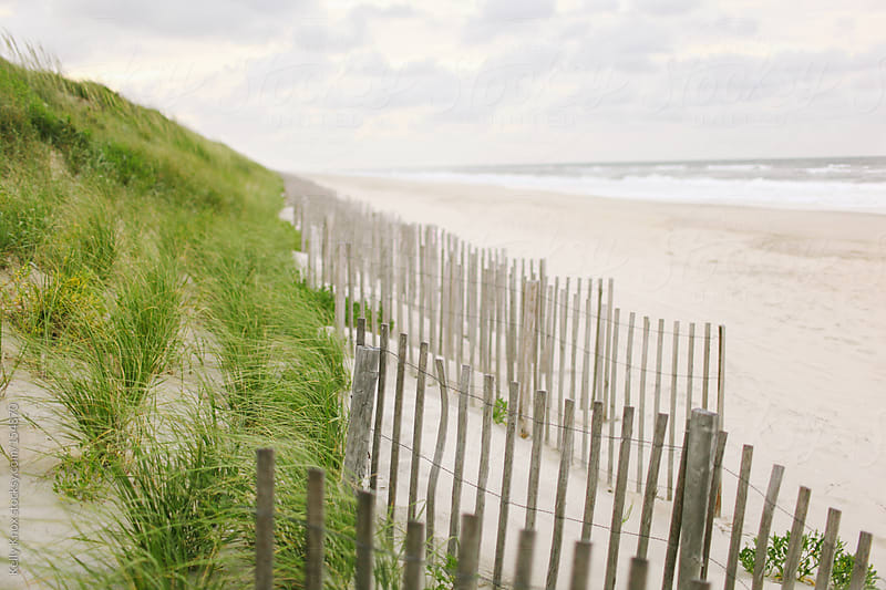 wooden fences along sand dunes on the beach by Kelly Knox for Stocksy United