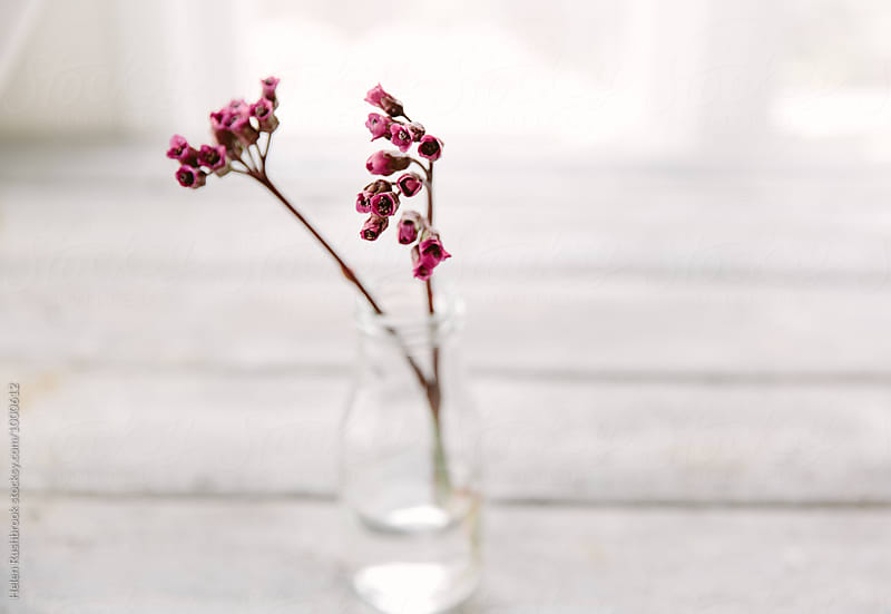 Bergenia Cordifolia flowers in a little bottle.  by Helen Rushbrook for Stocksy United