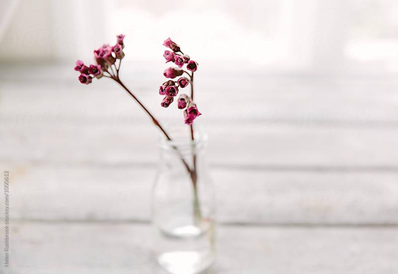 Bergenia Cordifolia flowers in a little bottle.  by Helen Rushbrook for Stocksy United