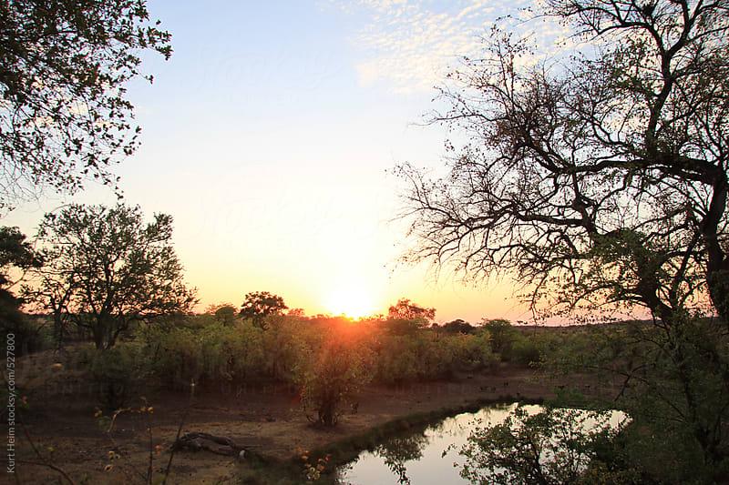 African Bush and Wildlife by Kurt Heim for Stocksy United