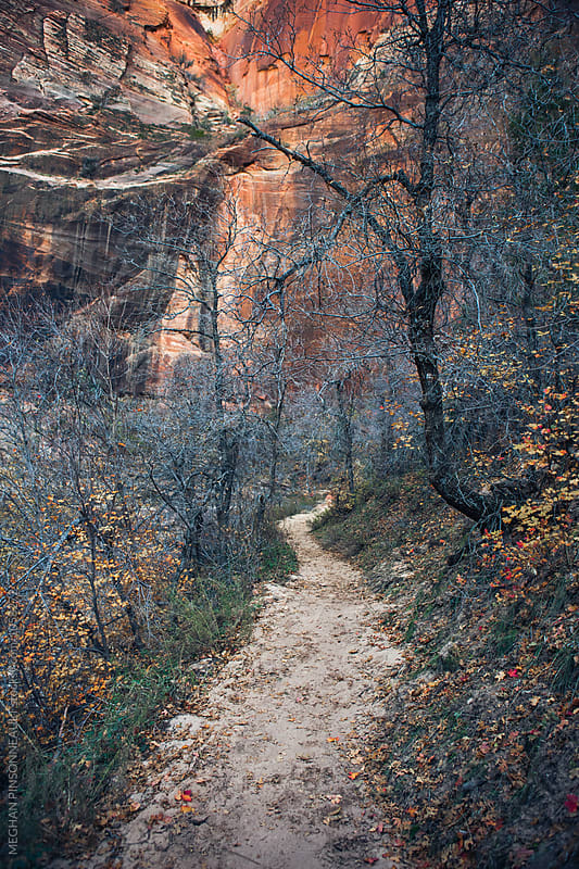 Hiking Path with Autumn Leaves and Vibrant Rock Wall by MEGHAN PINSONNEAULT for Stocksy United