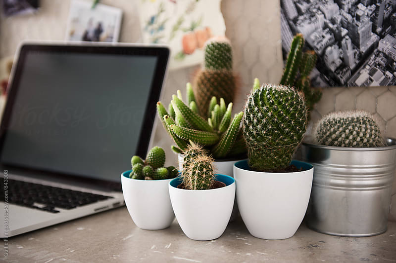 Several cacti and laptop on desktop by Guille Faingold for Stocksy United
