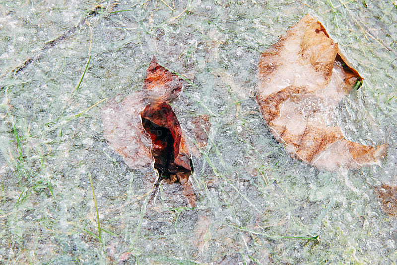 Two leaves frozen under ice on ground by Kerry Murphy for Stocksy United