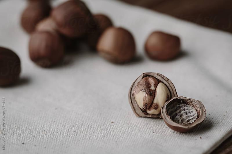 Hazelnuts by MaaHoo Studio for Stocksy United