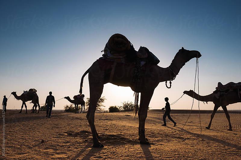 camel safari in the desert by RG&B Images for Stocksy United