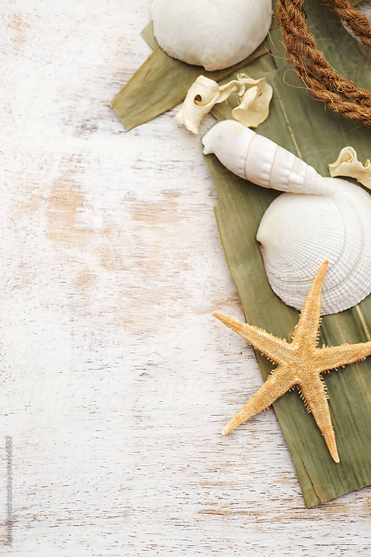 Starfish and Seashells with old,dry wood Beach Souvenirs by Jasmin Awad for Stocksy United